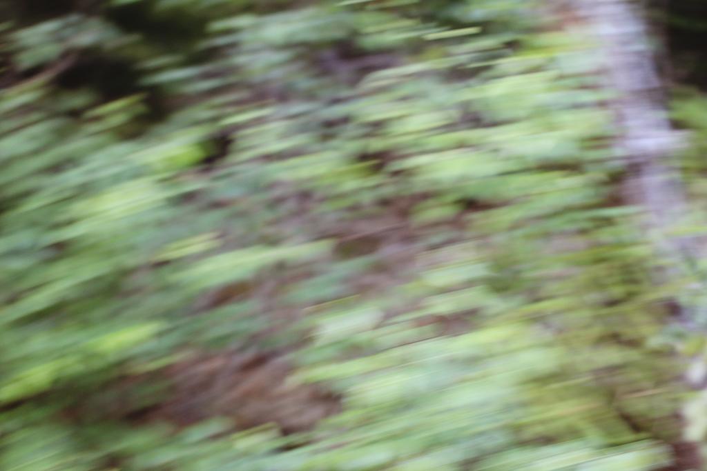 midsommar-lillabuvik-36
