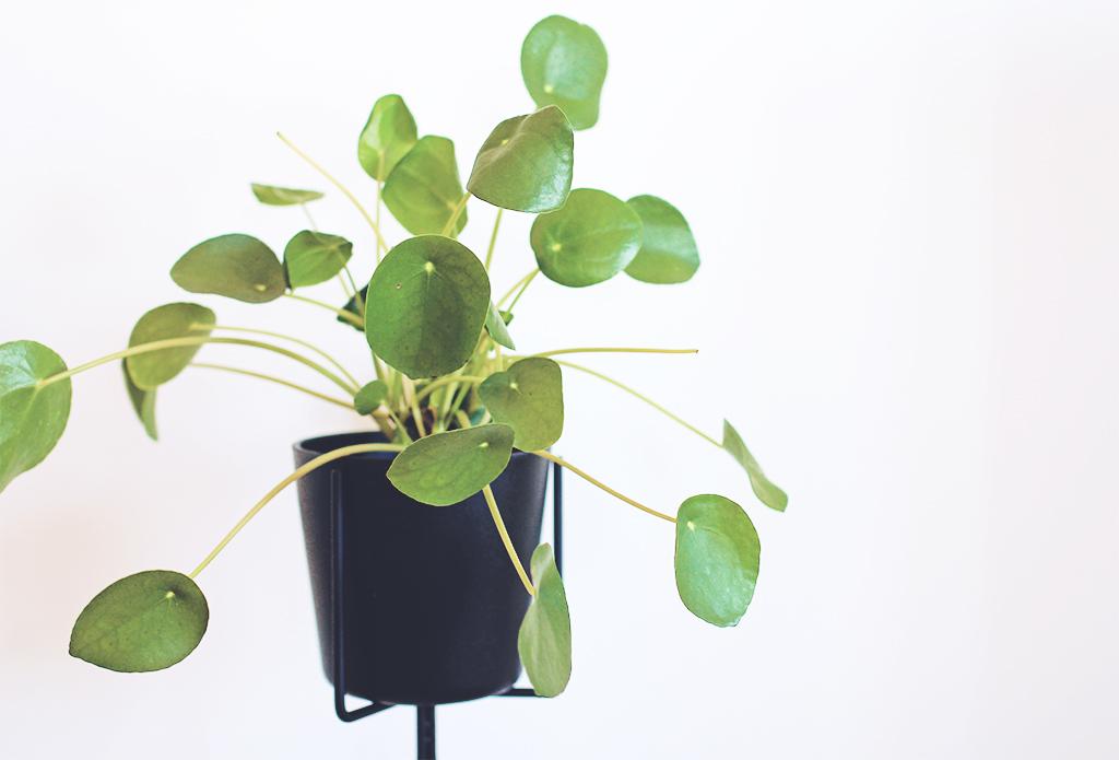 elefantora-02
