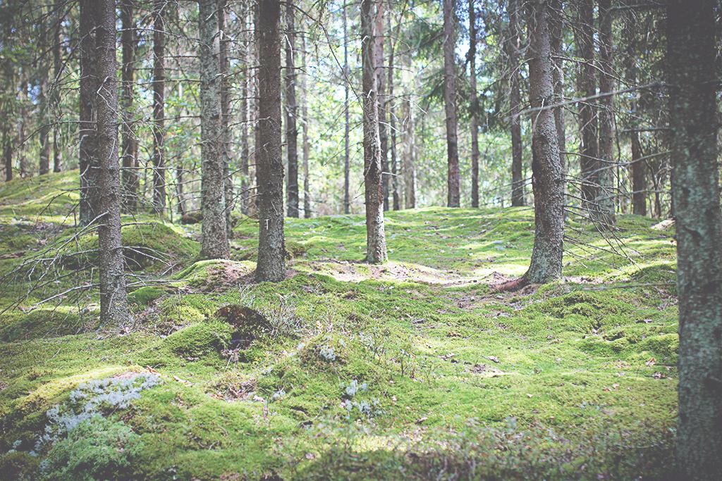 harsskogen-01