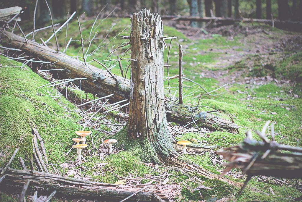harsskogen-03