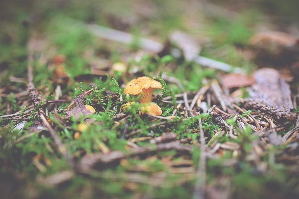 harsskogen-08