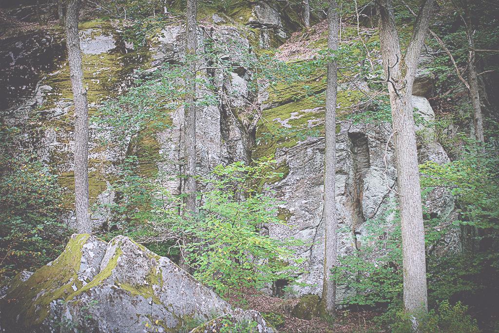 harsskogen-21