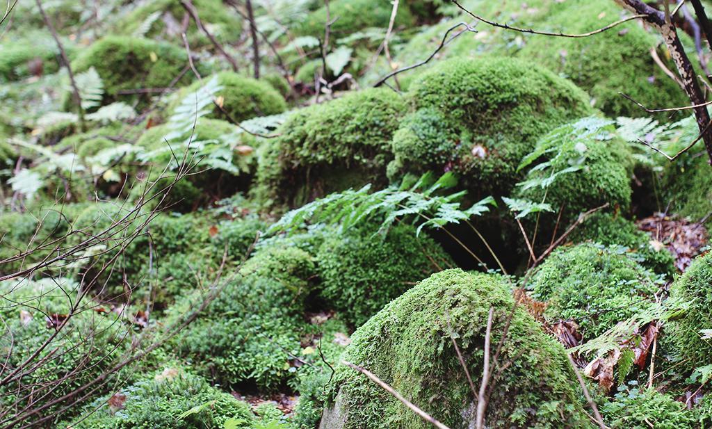 skog-o-svamp-04