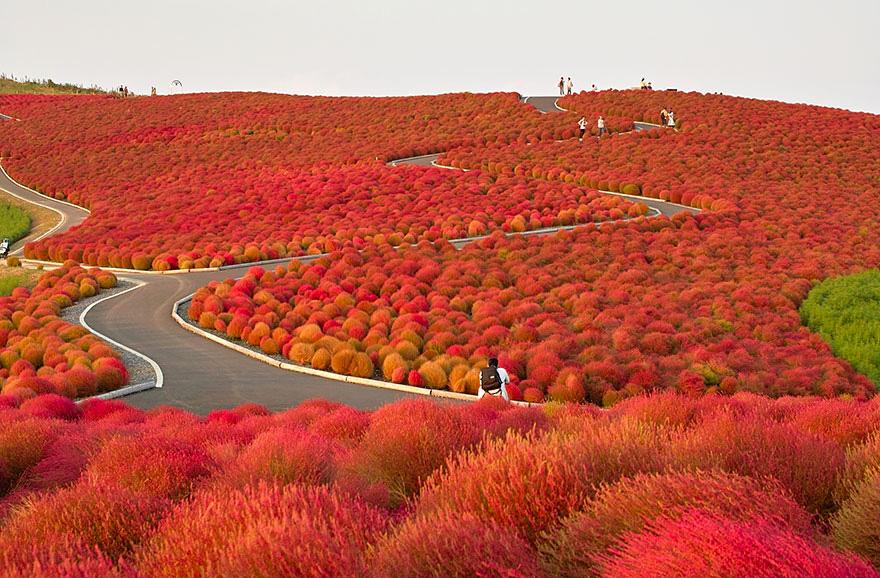 autumn-2b