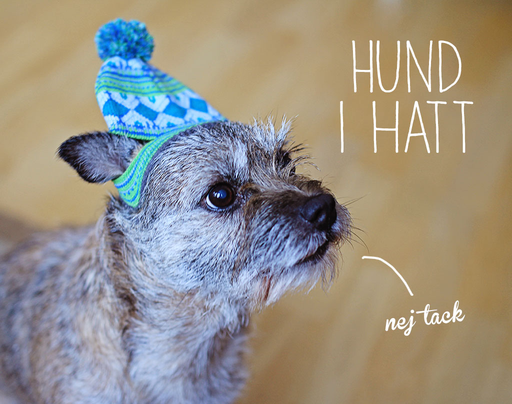 asta-hatt-1