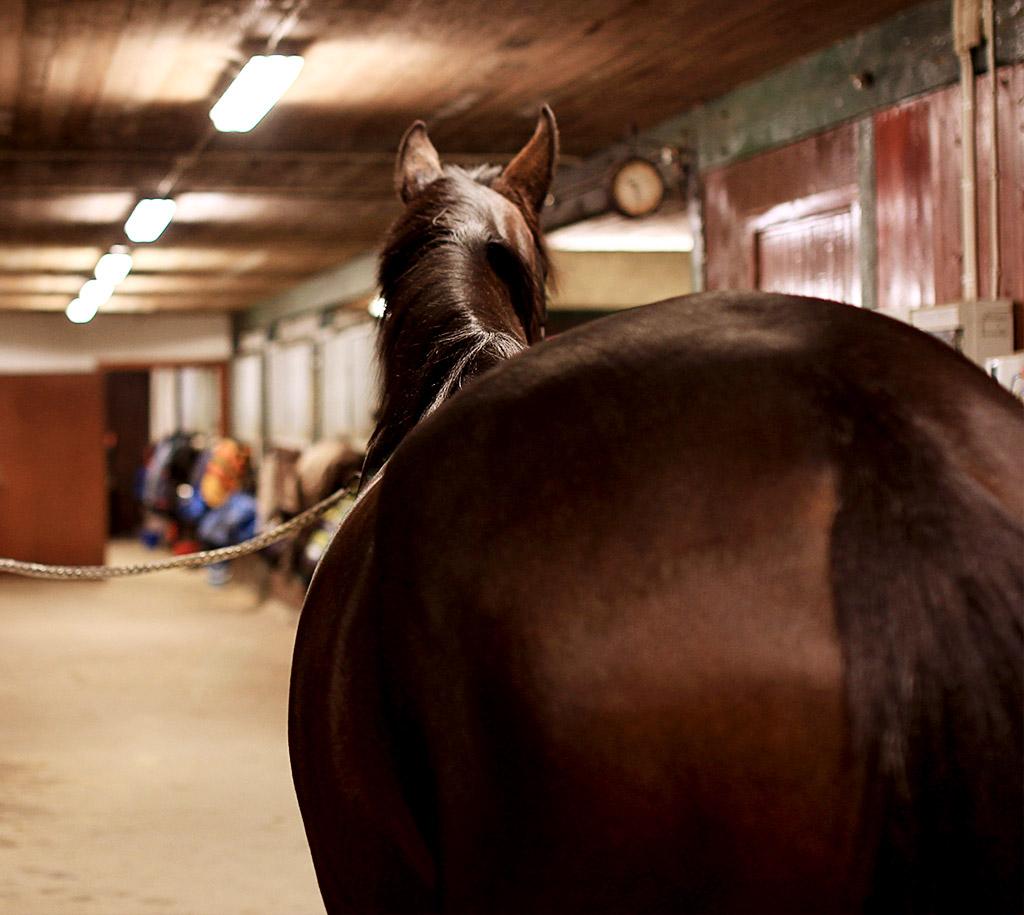 sky-full-of-horse-02