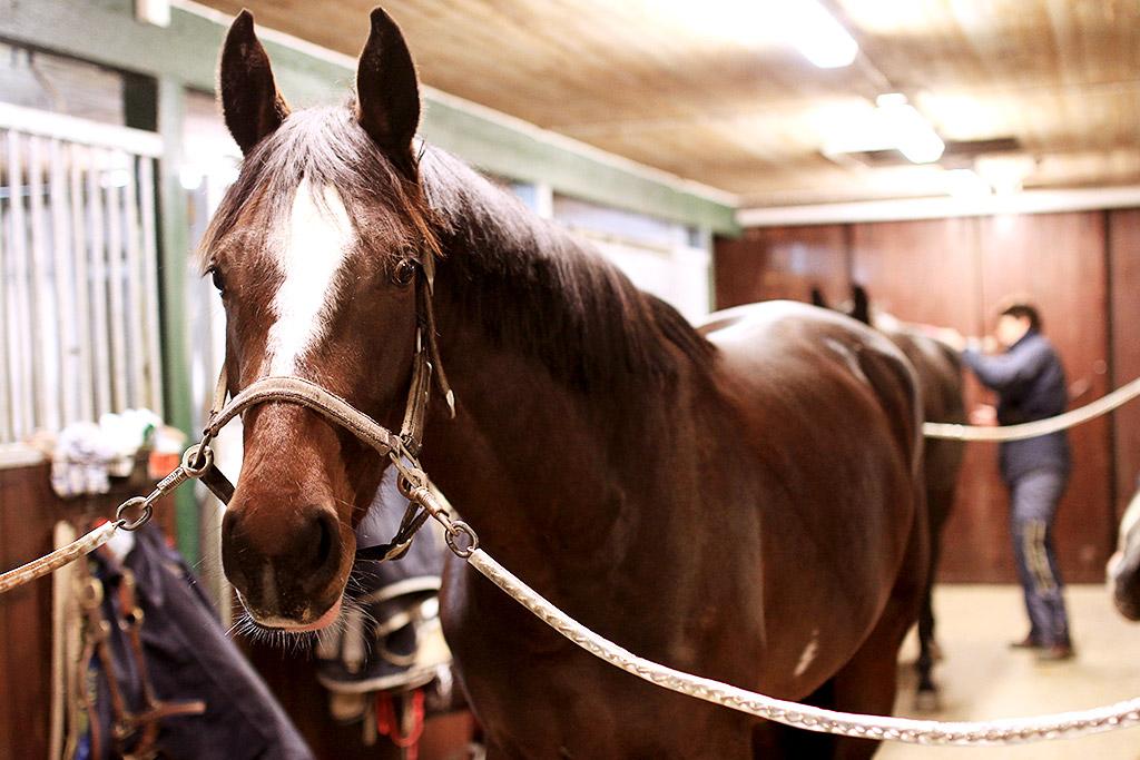 sky-full-of-horse-03