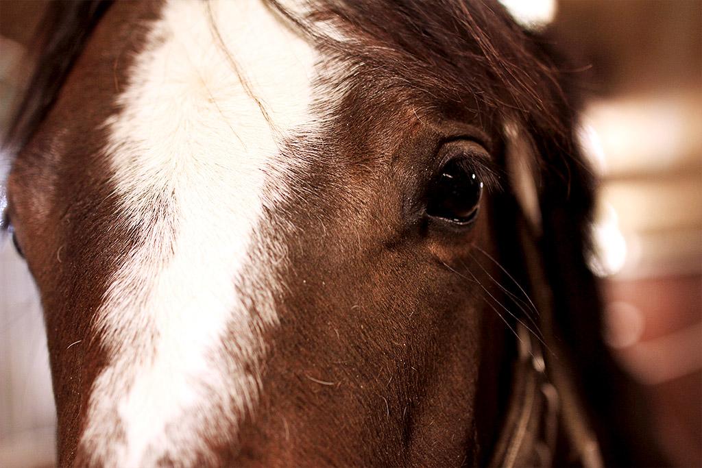 sky-full-of-horse-04
