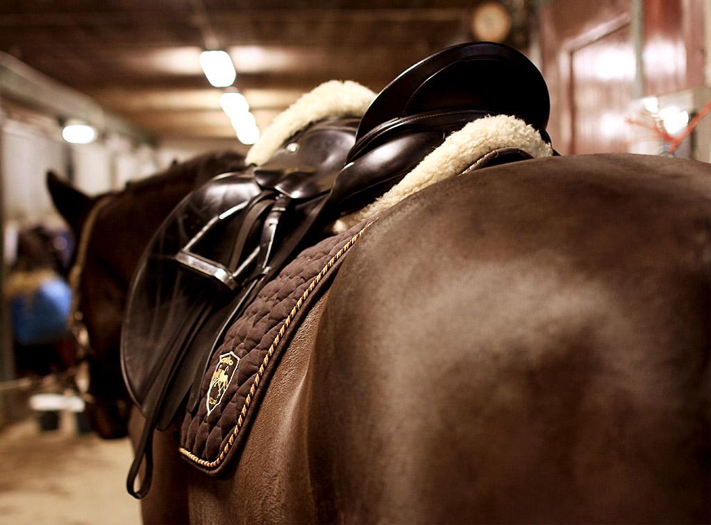 sky-full-of-horse-10