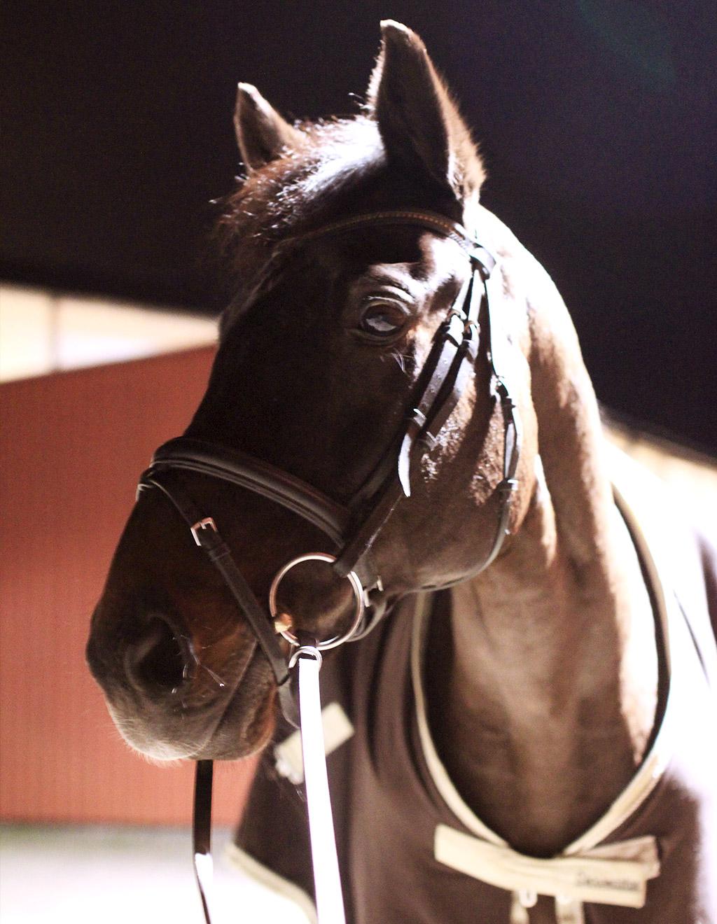 sky-full-of-horse-12