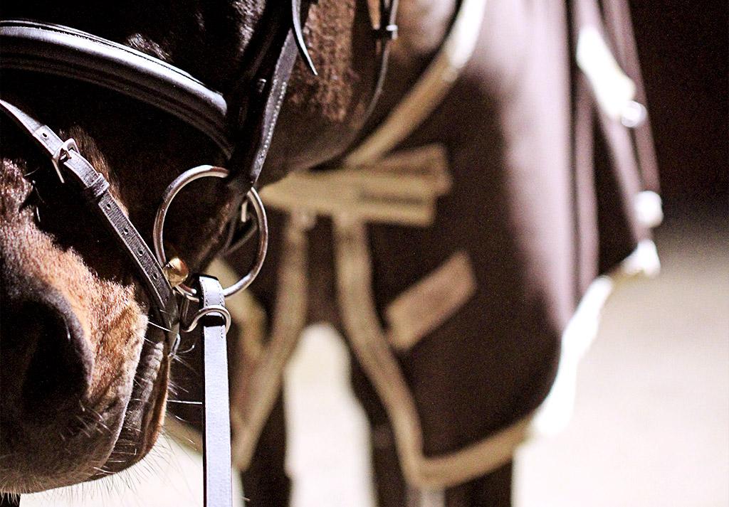 sky-full-of-horse-13