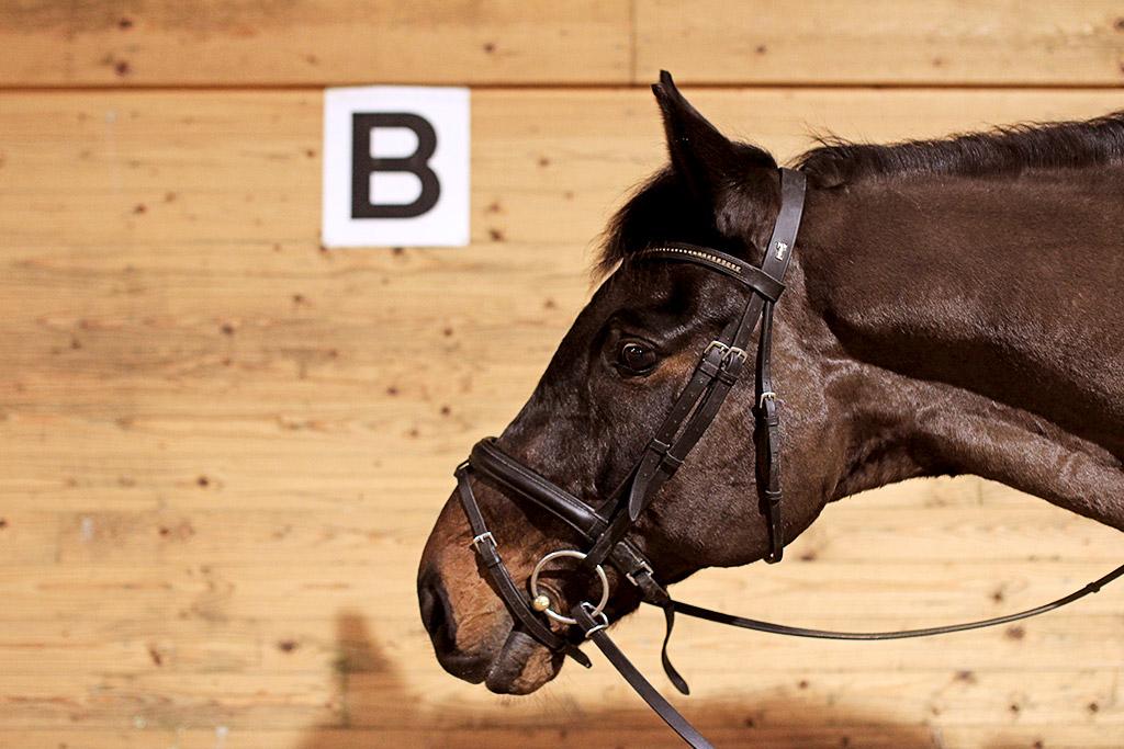 sky-full-of-horse-16