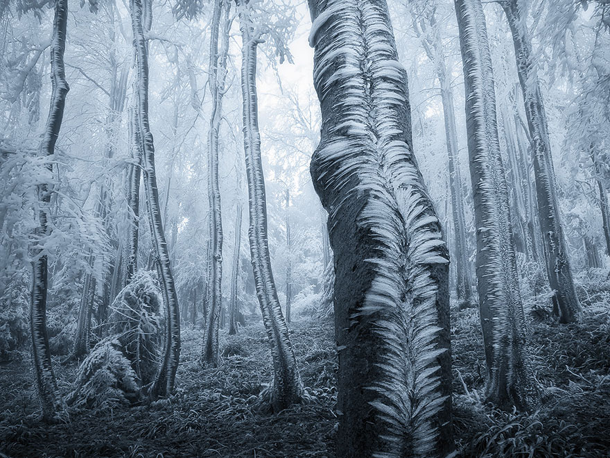 beautiful-mysterious-forests-5__880