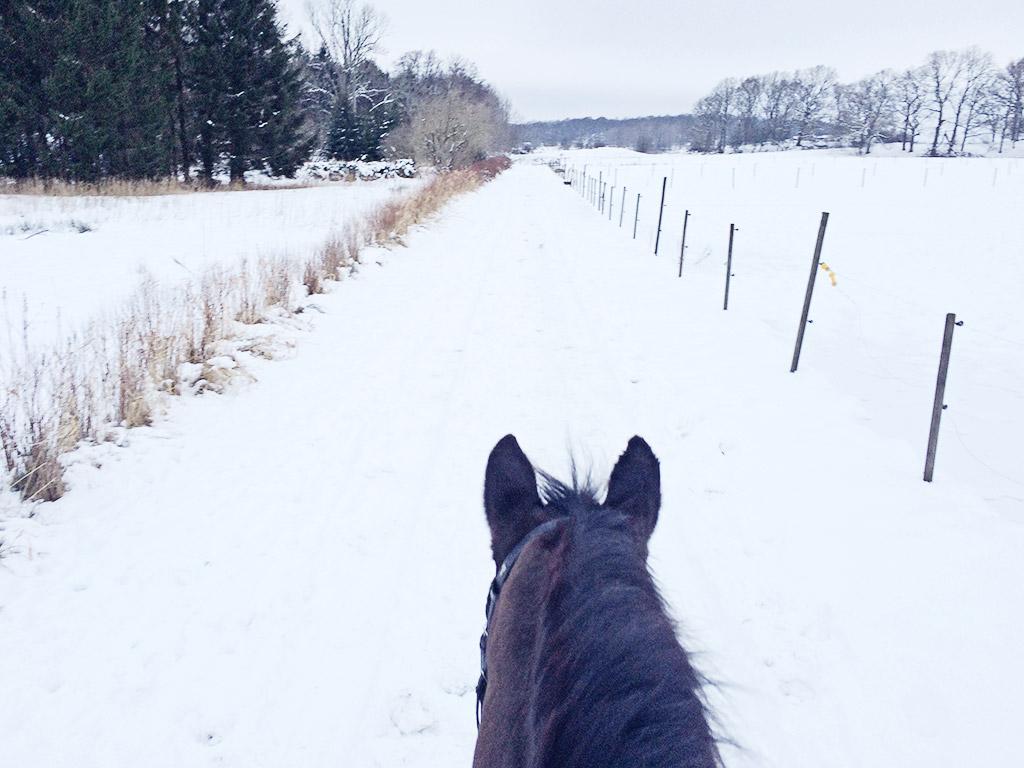 snowyhorsie-1