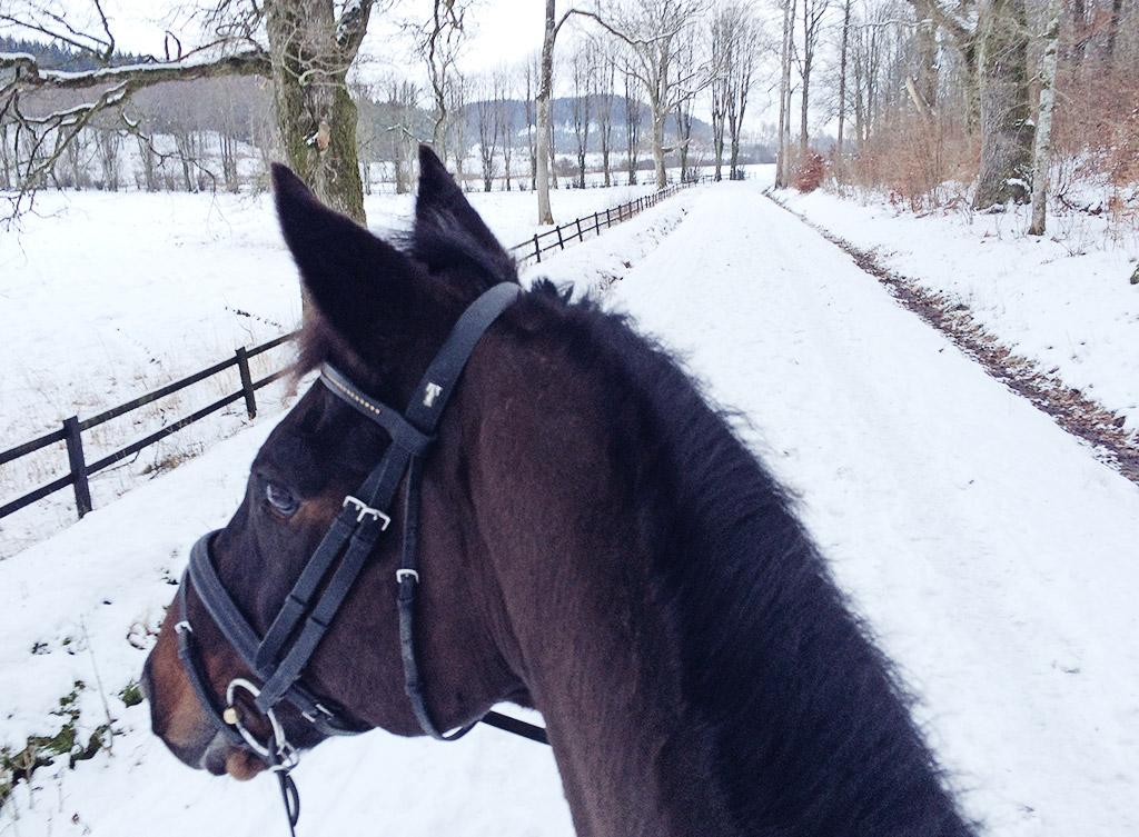 snowyhorsie-2