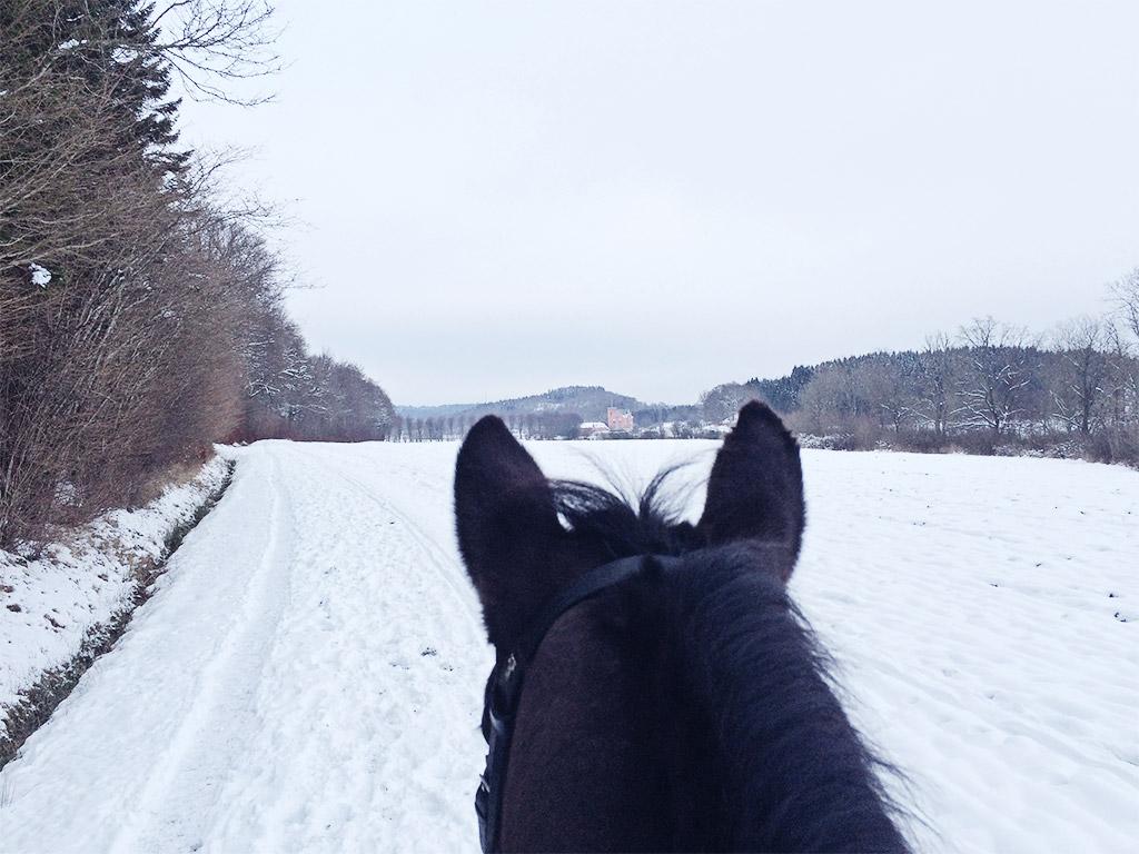 snowyhorsie-3
