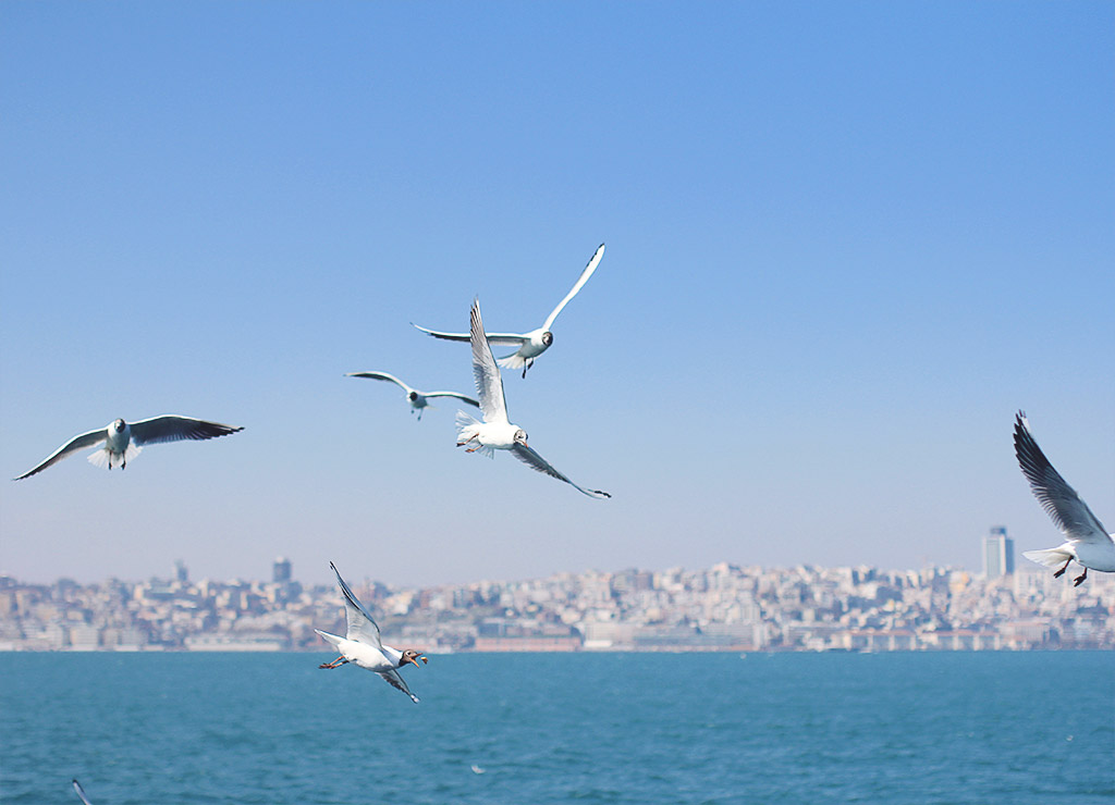 istanbul-sondag-17