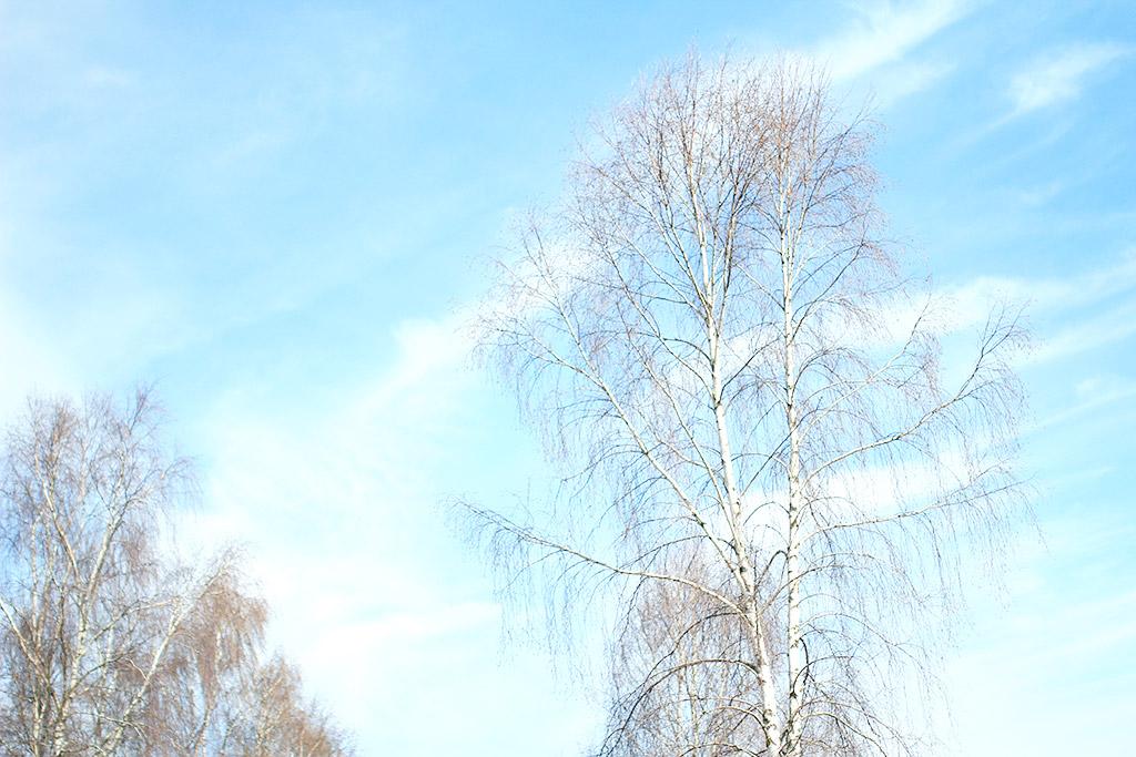 sol-slott-hest-02