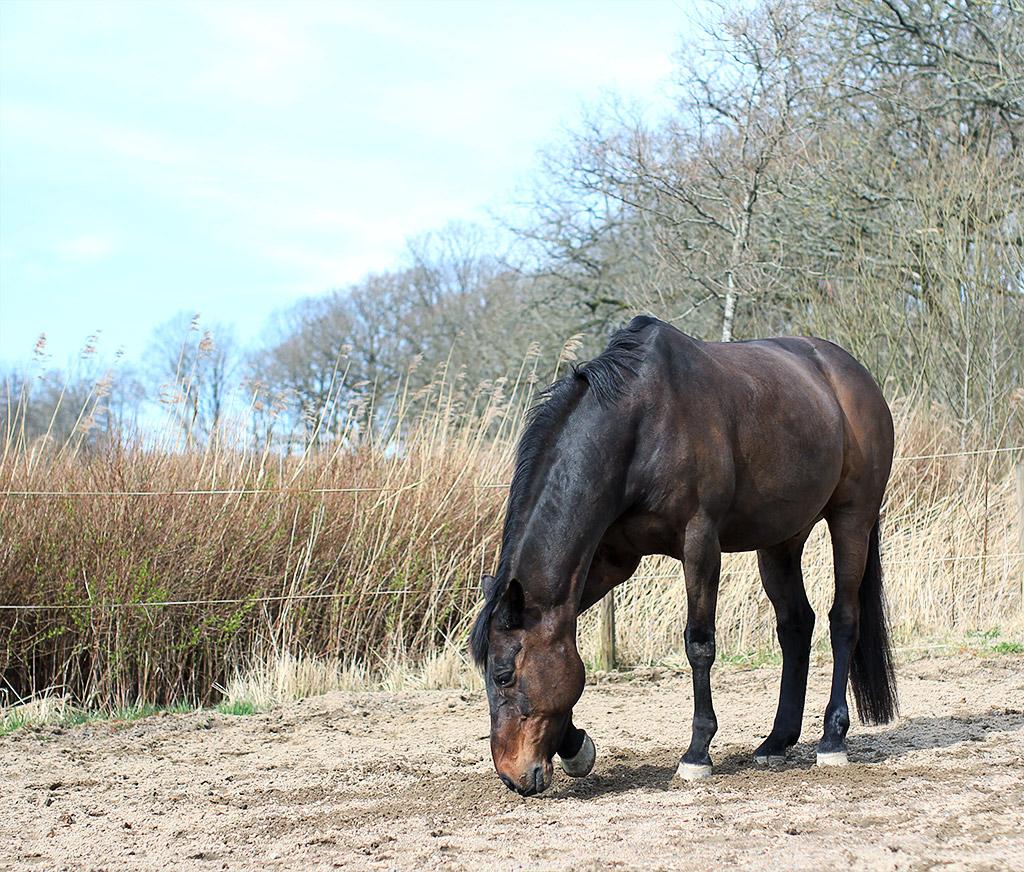 sol-slott-hest-05