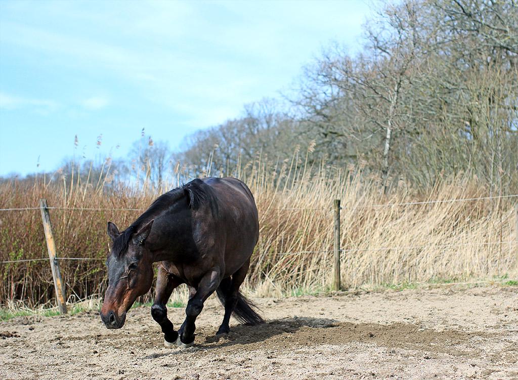sol-slott-hest-06