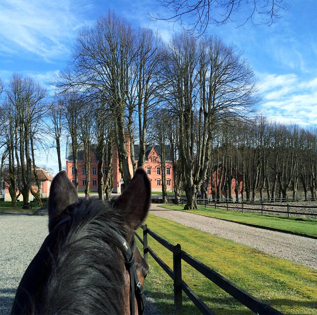sol-slott-hest-14