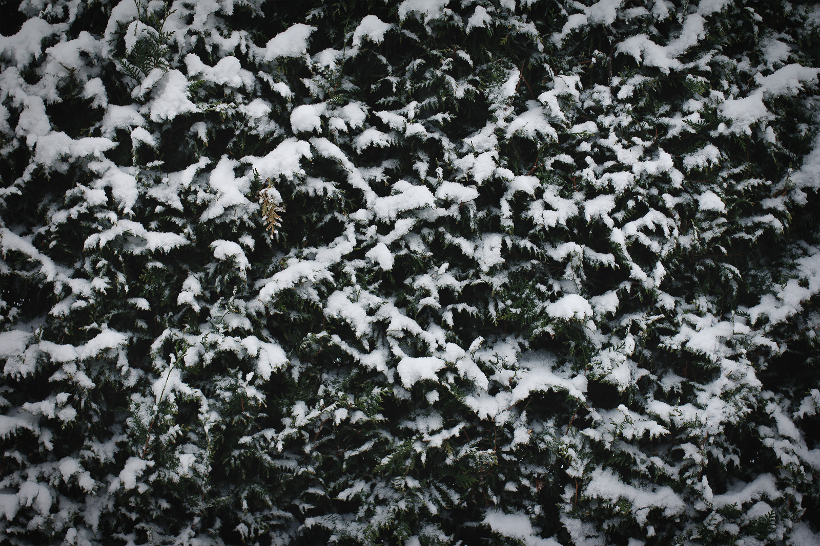 snow-01