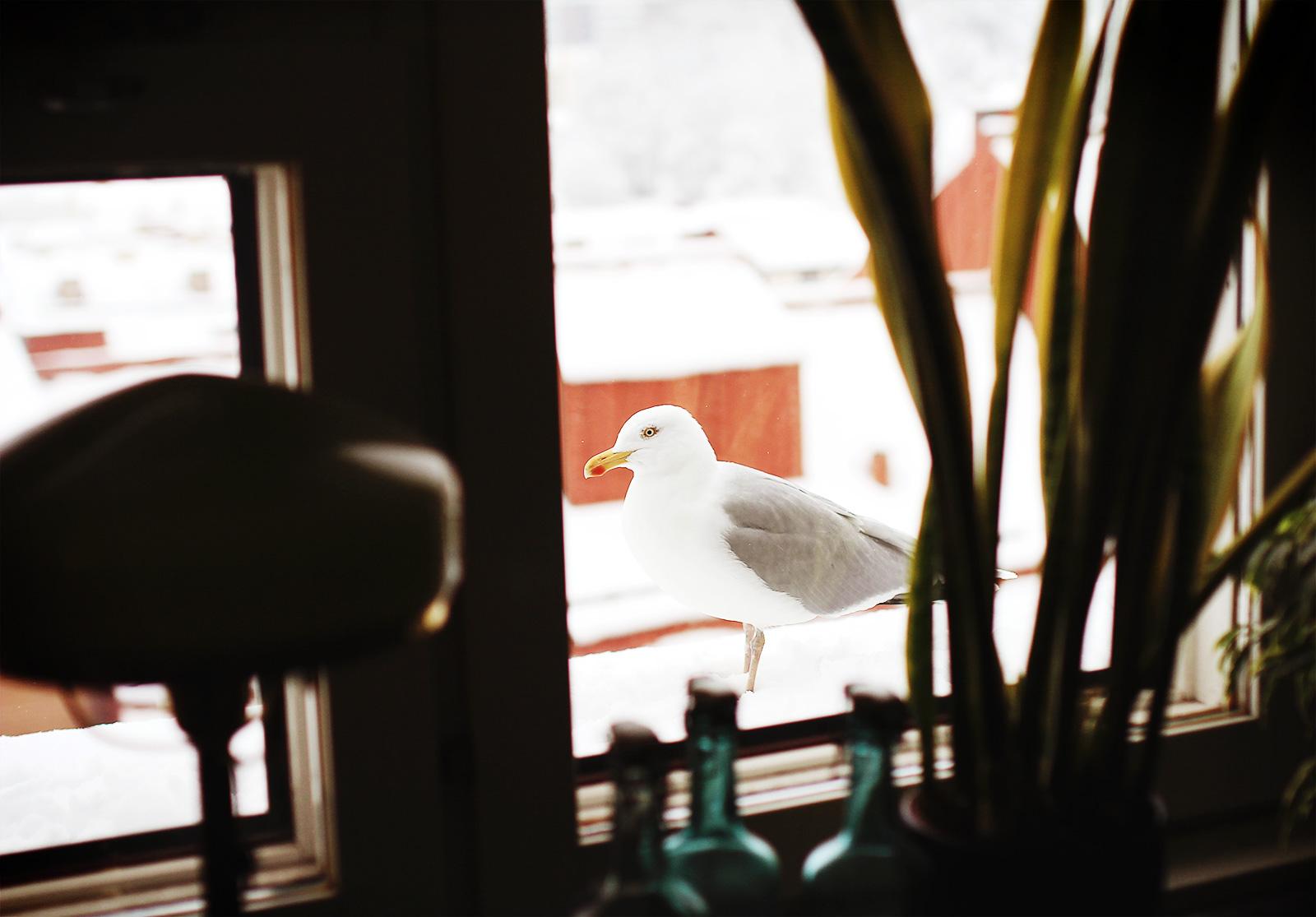 birdie-namnam-01