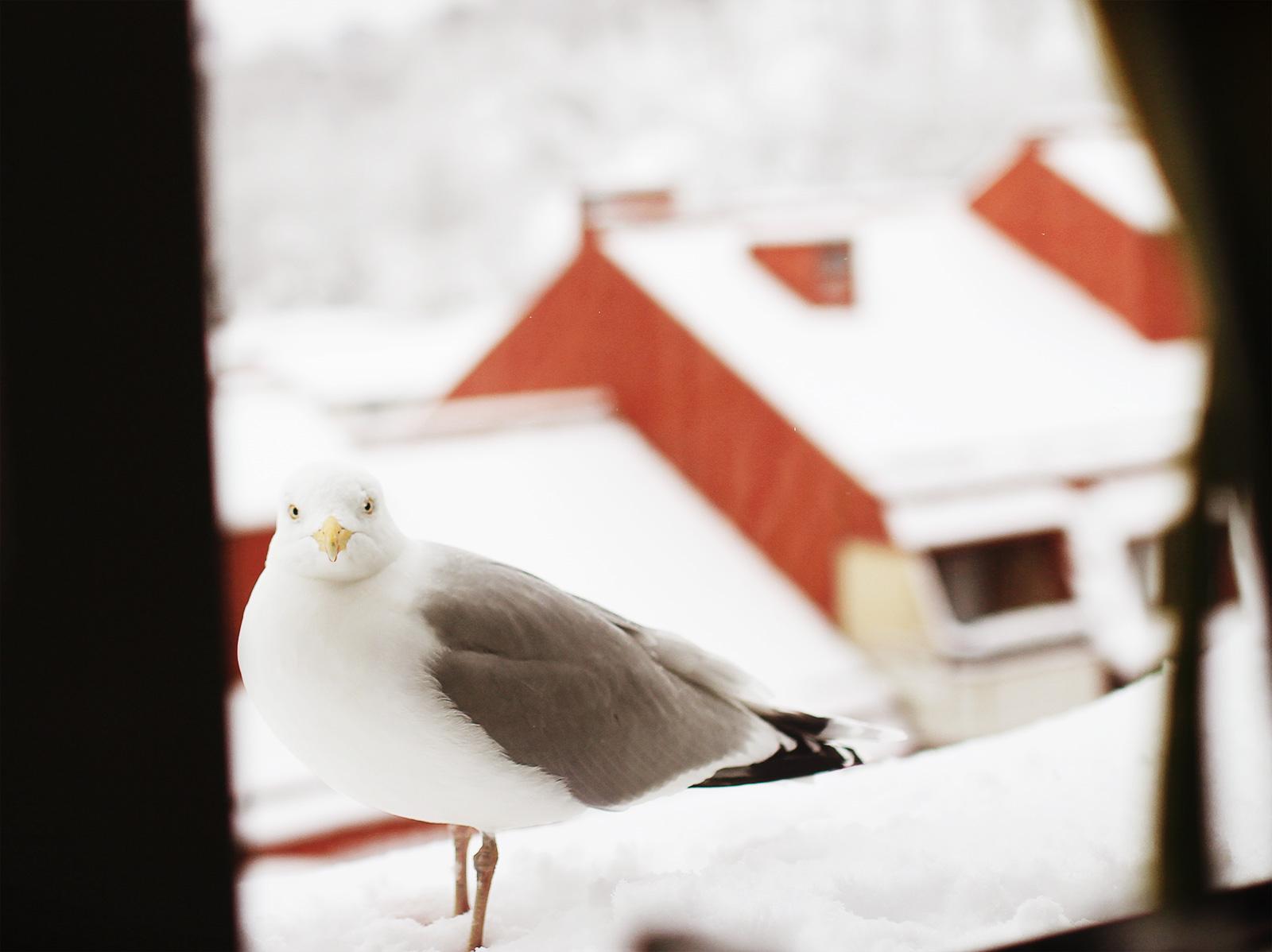 birdie-namnam-02