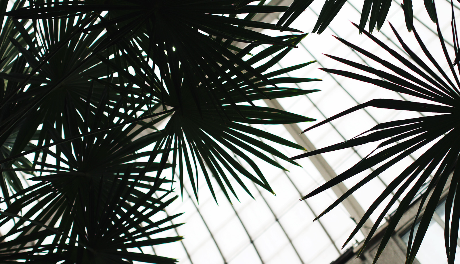 palmhuset-32