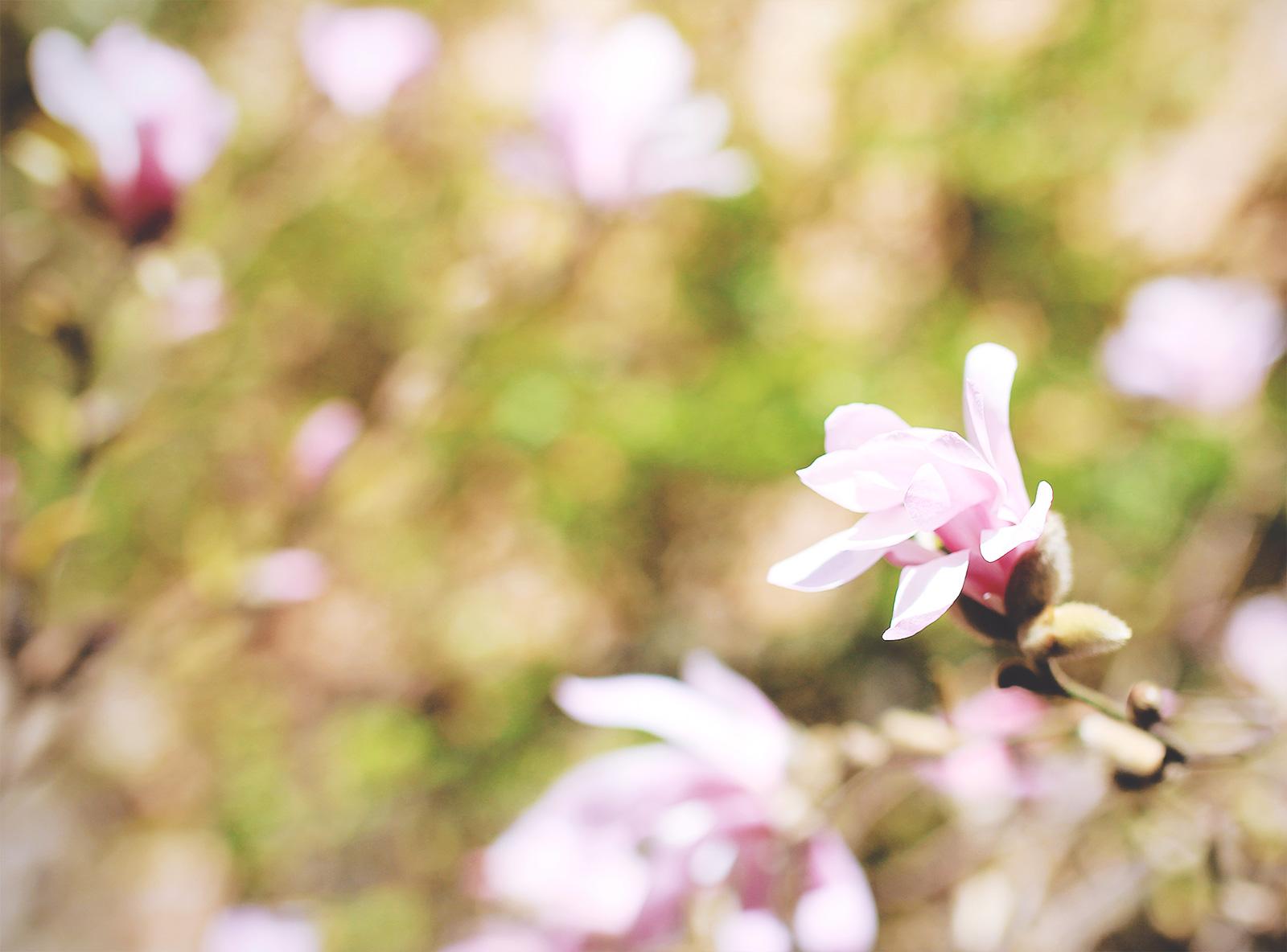toughest-spring-01