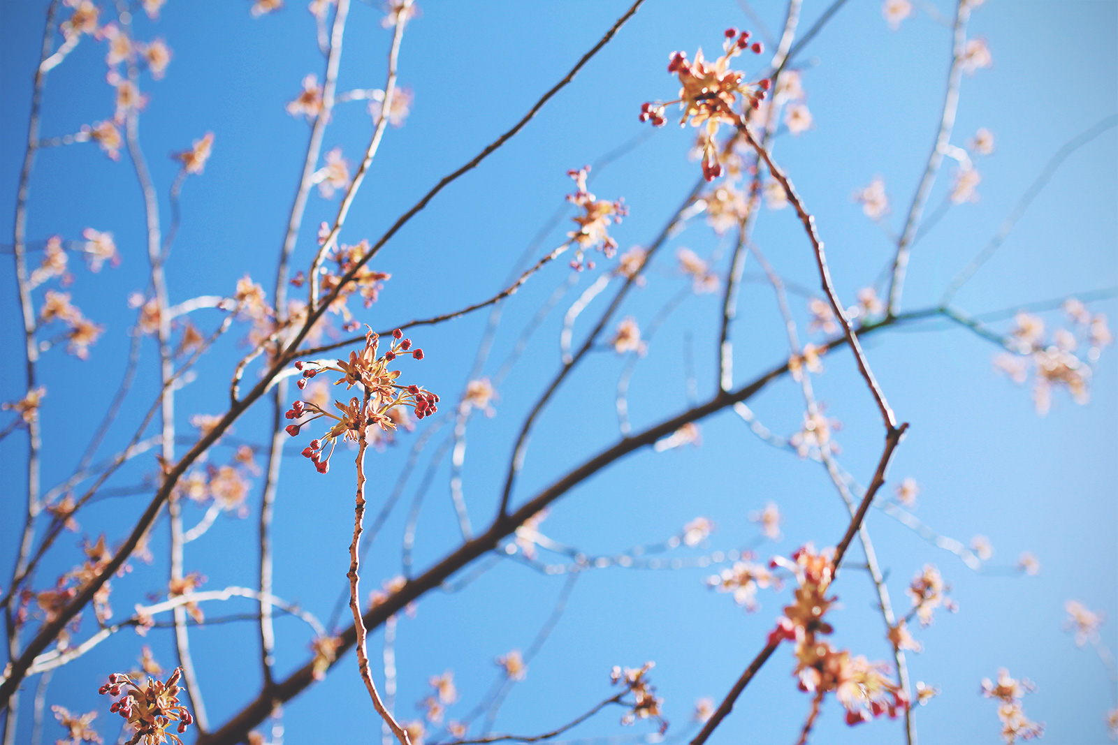 toughest-spring-02