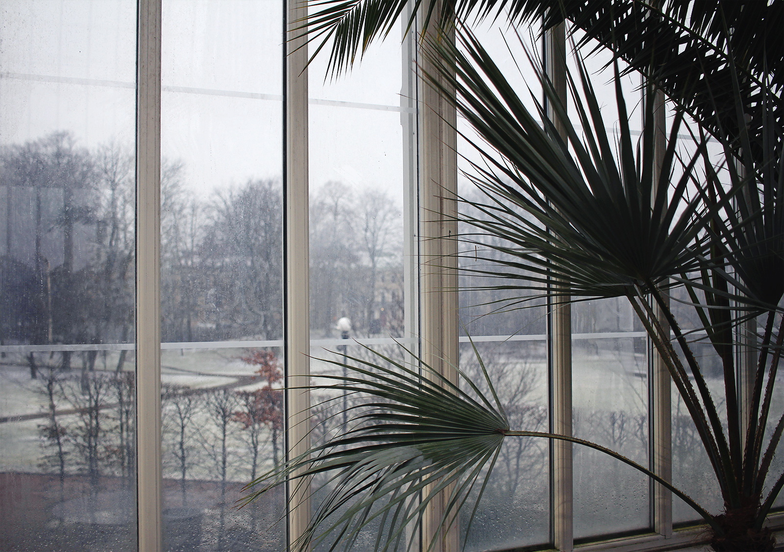 palmhuset-09