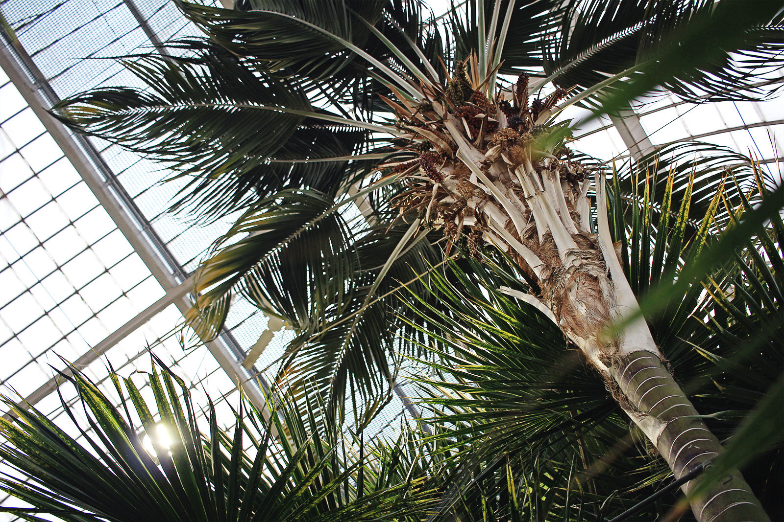 palmhuset-19